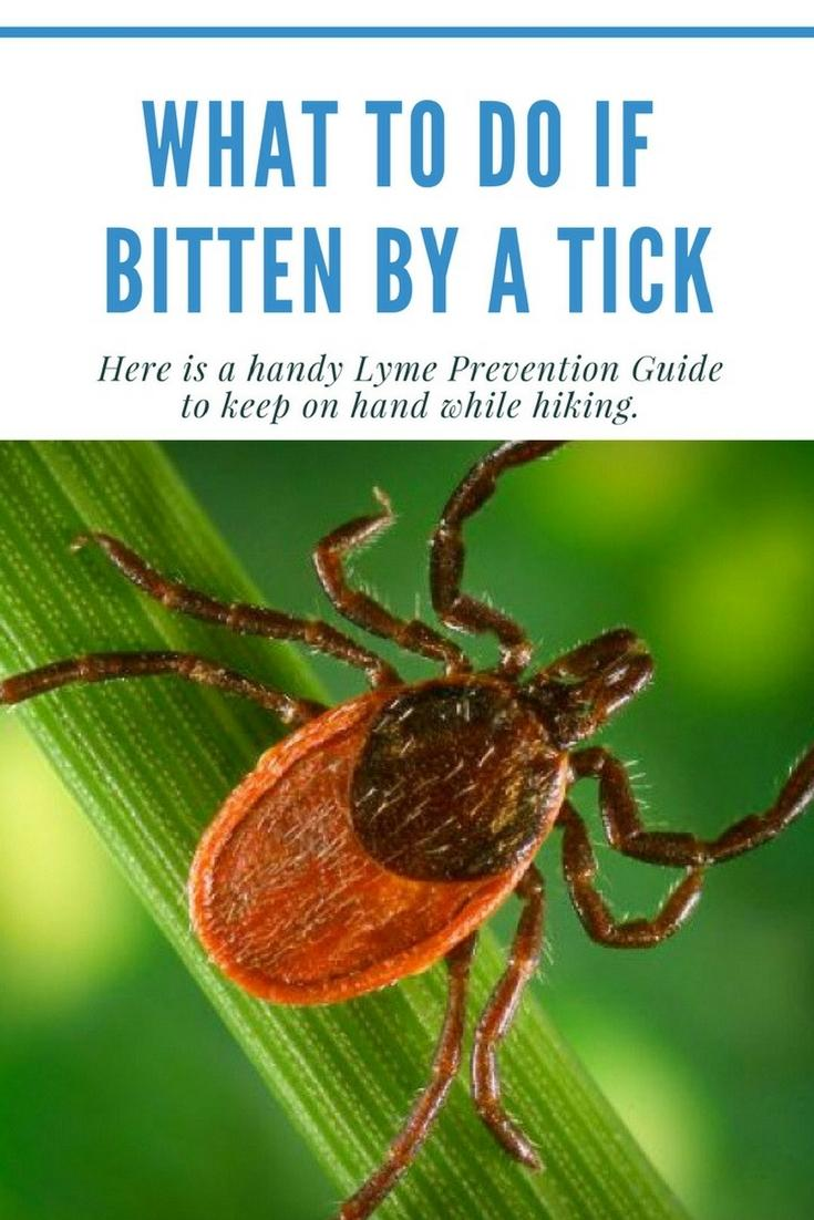 When bitten by a tick, it's important that your immune system functions optimally. To avoid further inflammation be sure to follow this guide. -Santa Barbara Fitness Magazine